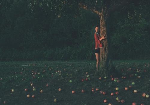 Jablečná sezóna